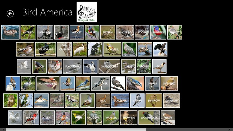 Bird America screen shot 5