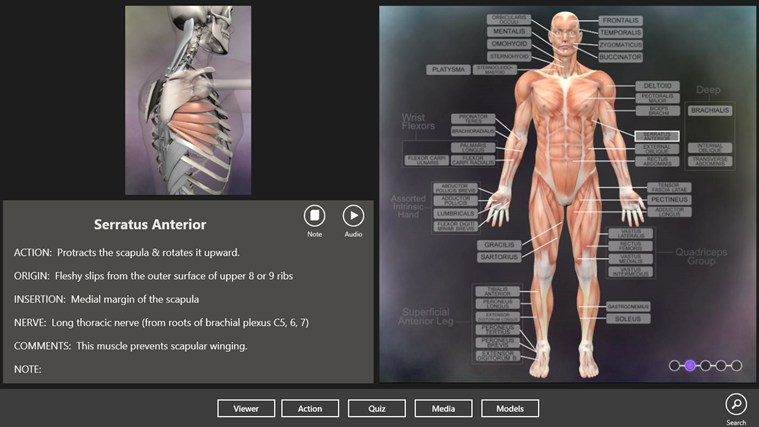 Muscle and Bone Anatomy 3D captura de pantalla 1