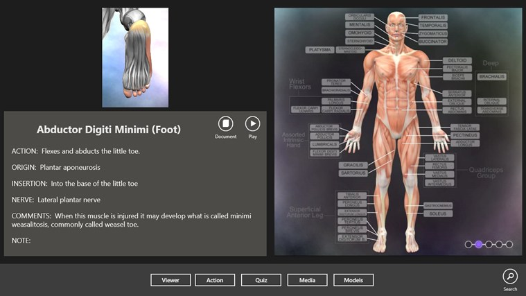 Muscle and Bone Anatomy 3D captura de pantalla 5