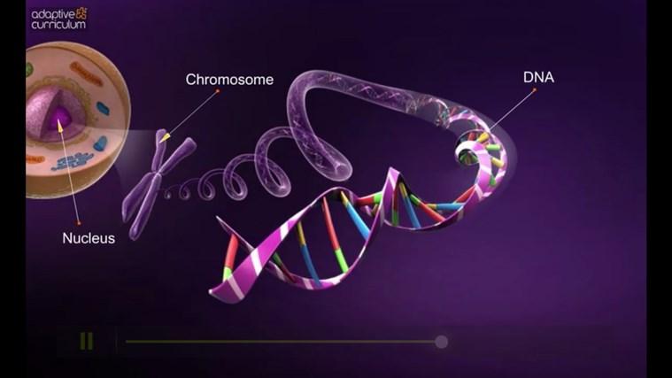 AC Life Science: DNA Structure snímek obrazovky 5