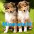 Puppy Mismatch
