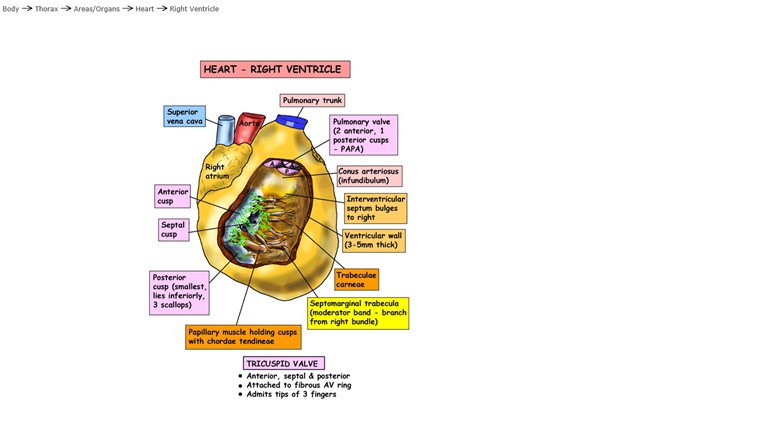 Instant Anatomy screen shot 1