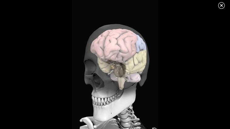 Anatomy 3D: Organs screen shot 1