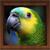 Bird Calls - Free : 4500+ Bird Sounds, Bird Songs, Bird Identification