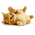 Cats Wallpapers HD