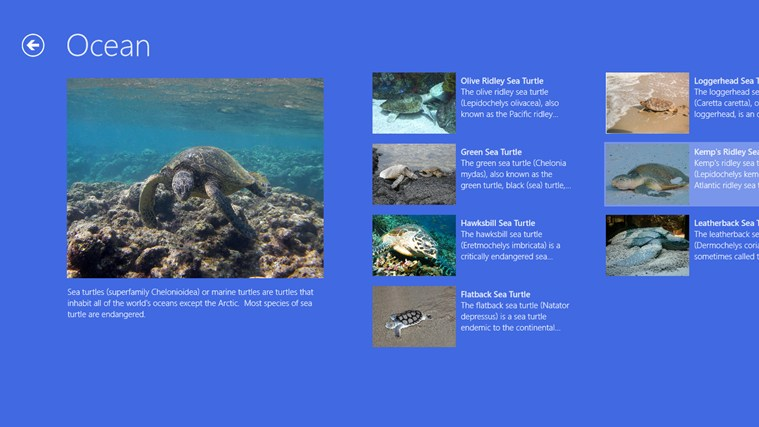 Turtles ekrano nuotrauka 1