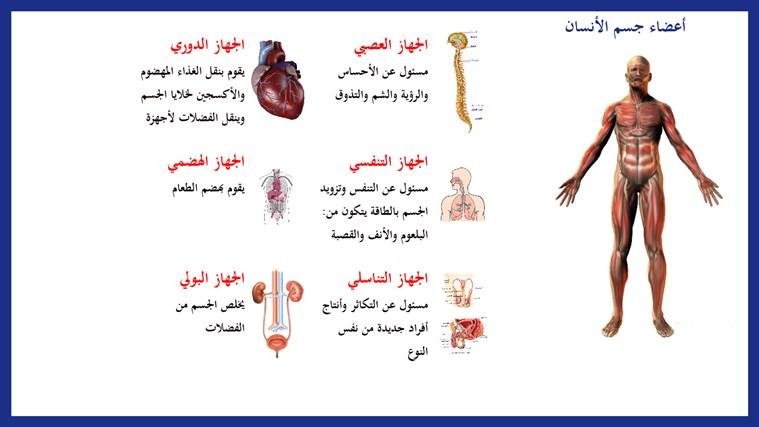 أعضاء جسم الأنسان צילום מסך 1