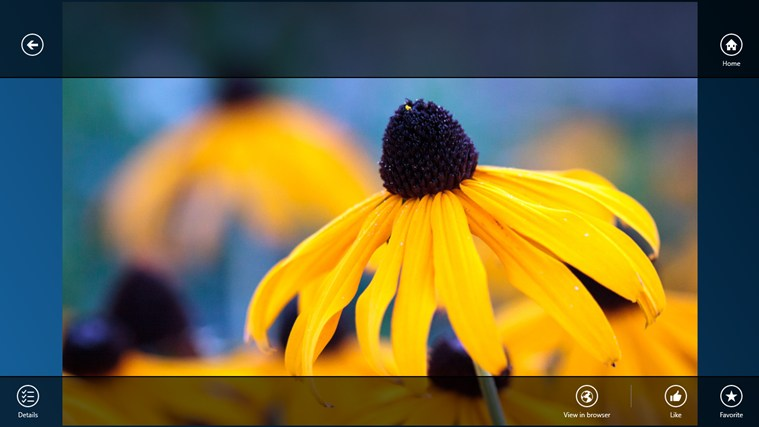 499+1px screen shot 5