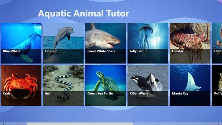 Aquatic Animal Tutor ekrānuzņēmums 1